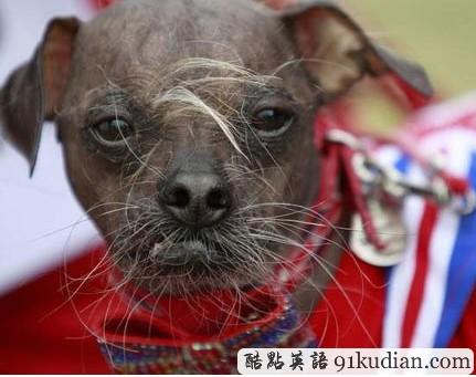 我国最丑的动物